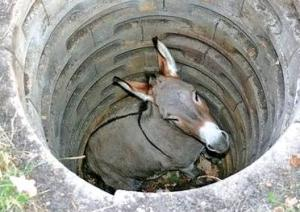 old-mule-in-the-well