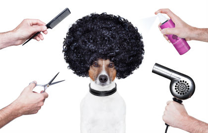 dog-grooming-trends